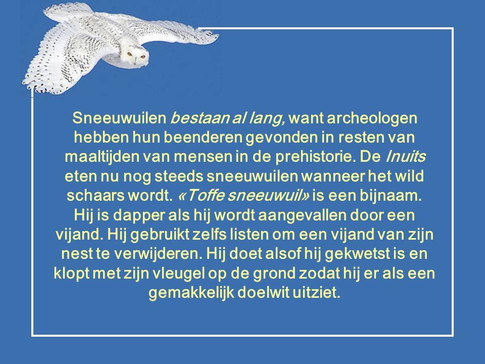 Sneeuwuilen bestaan al lang, want archeologen hebben hun beenderen gevonden in resten van maaltijden van mensen in de prehistorie.