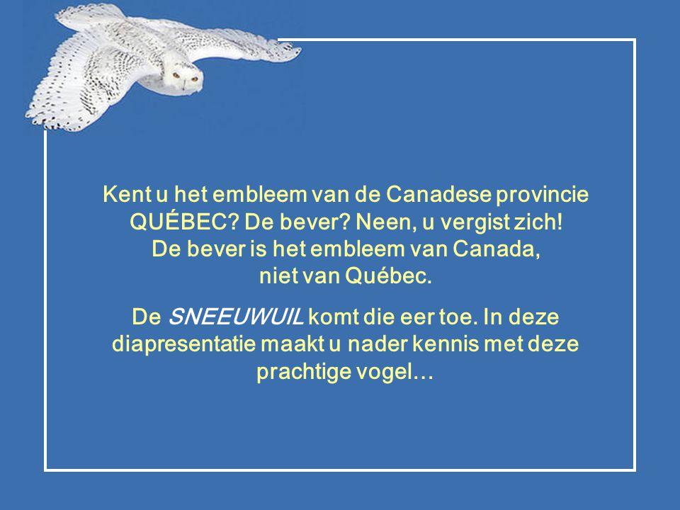 Kent u het embleem van de Canadese provincie QUÉBEC. De bever