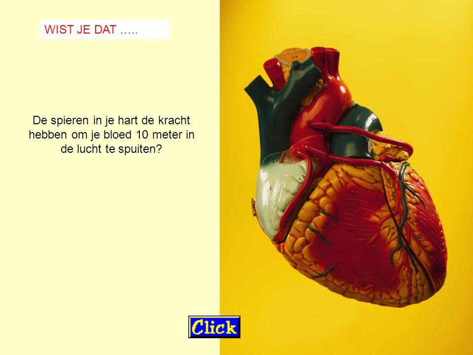 WIST JE DAT ….. De spieren in je hart de kracht hebben om je bloed 10 meter in de lucht te spuiten