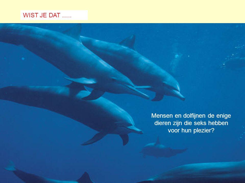 WIST JE DAT ….. Mensen en dolfijnen de enige dieren zijn die seks hebben voor hun plezier