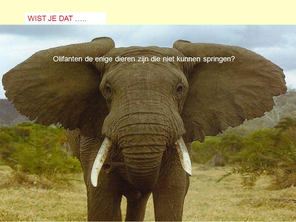 Olifanten de enige dieren zijn die niet kunnen springen