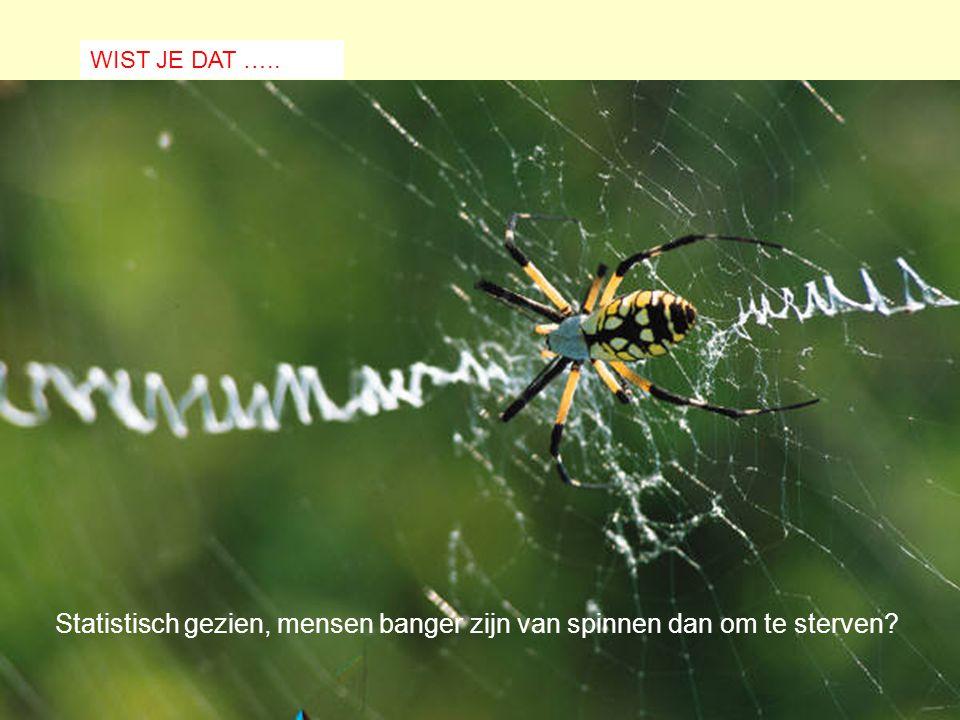 Statistisch gezien, mensen banger zijn van spinnen dan om te sterven