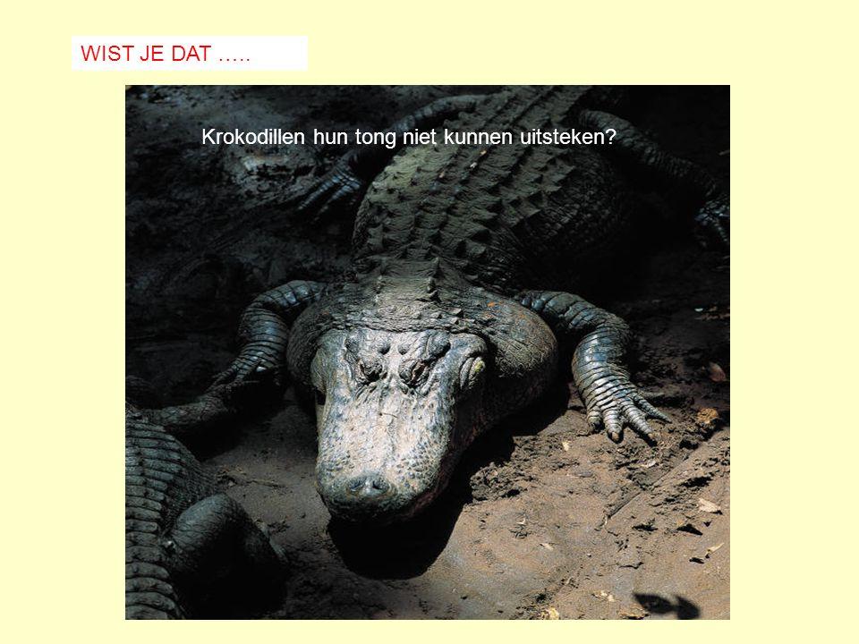 WIST JE DAT ….. Krokodillen hun tong niet kunnen uitsteken