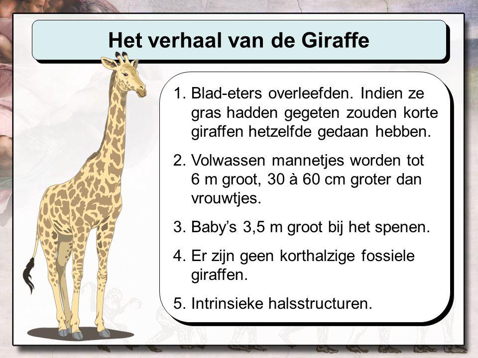 Het verhaal van de Giraffe