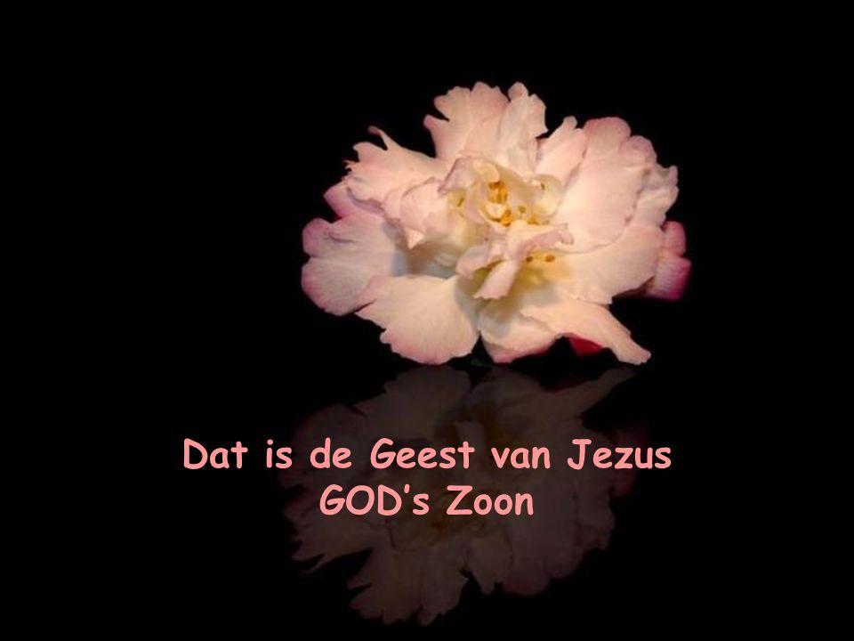 Dat is de Geest van Jezus GOD's Zoon