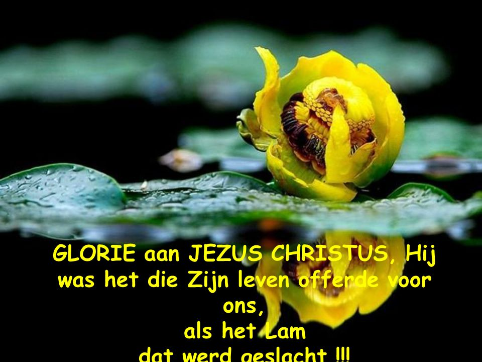 GLORIE aan JEZUS CHRISTUS, Hij was het die Zijn leven offerde voor ons,