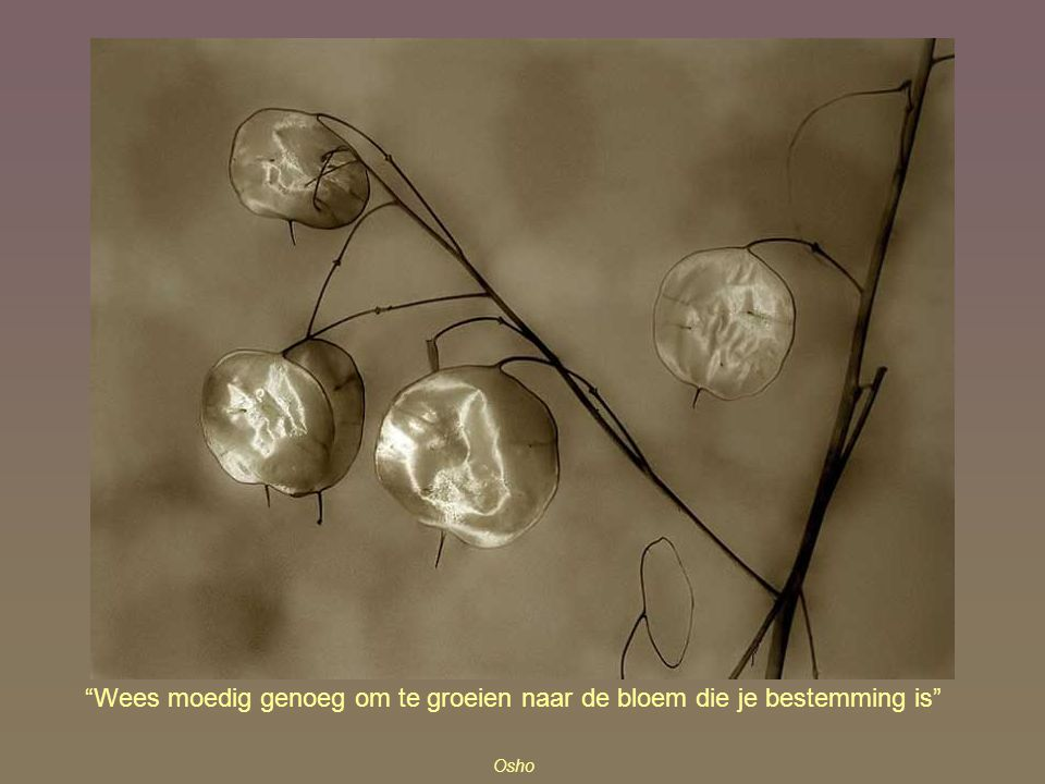 Wees moedig genoeg om te groeien naar de bloem die je bestemming is