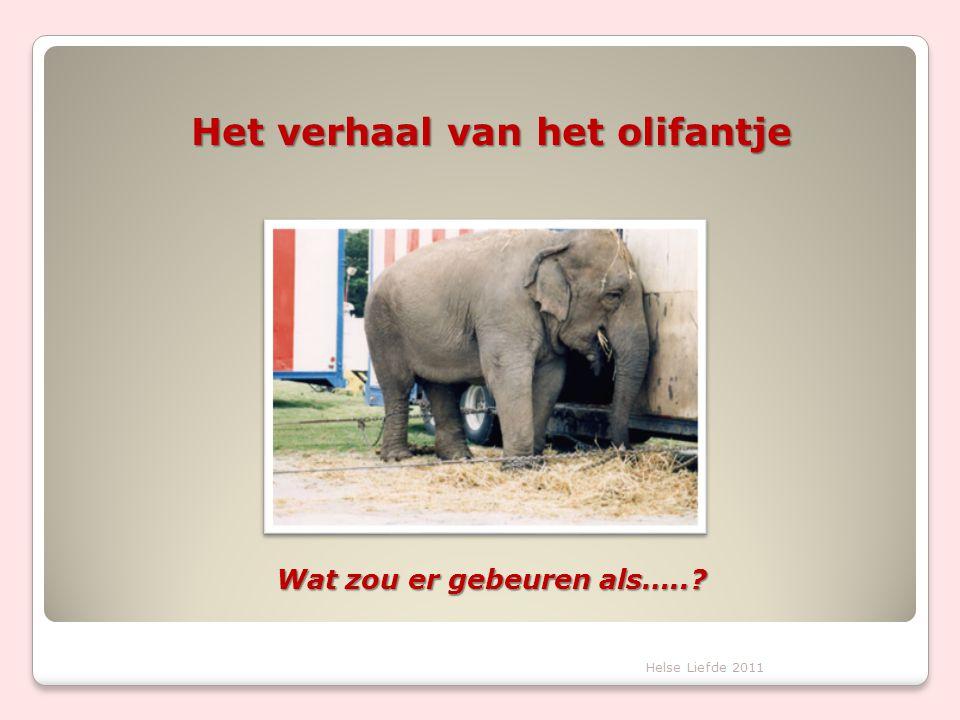 Het verhaal van het olifantje Wat zou er gebeuren als…..