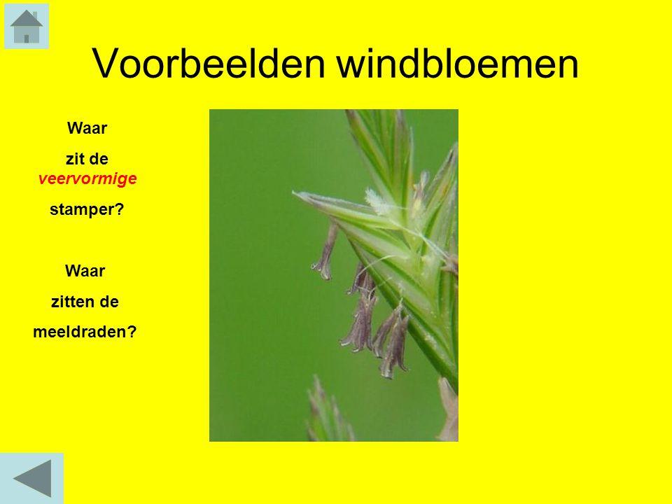 Voorbeelden windbloemen
