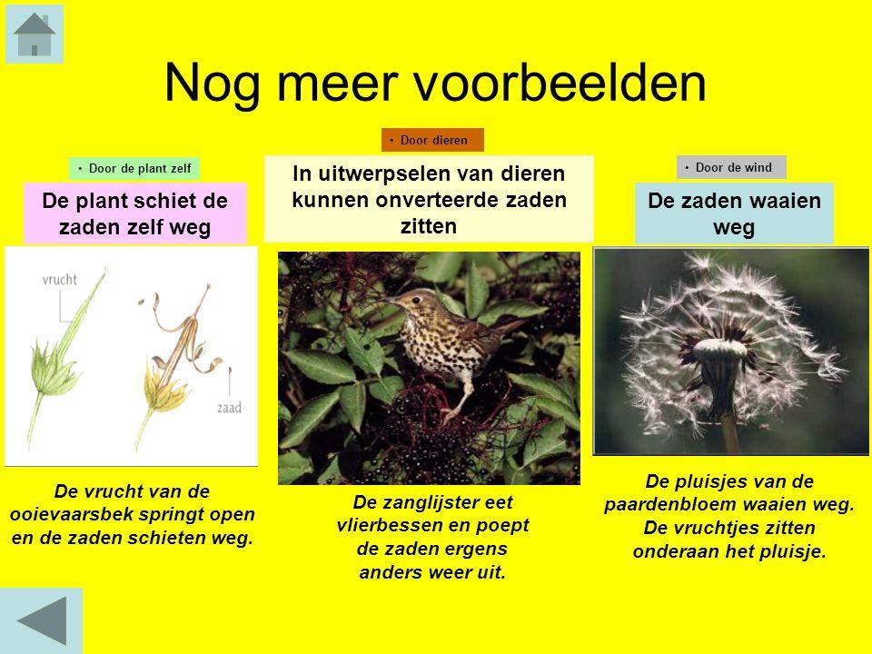 Nog meer voorbeelden Door dieren. Door de plant zelf. In uitwerpselen van dieren kunnen onverteerde zaden zitten.