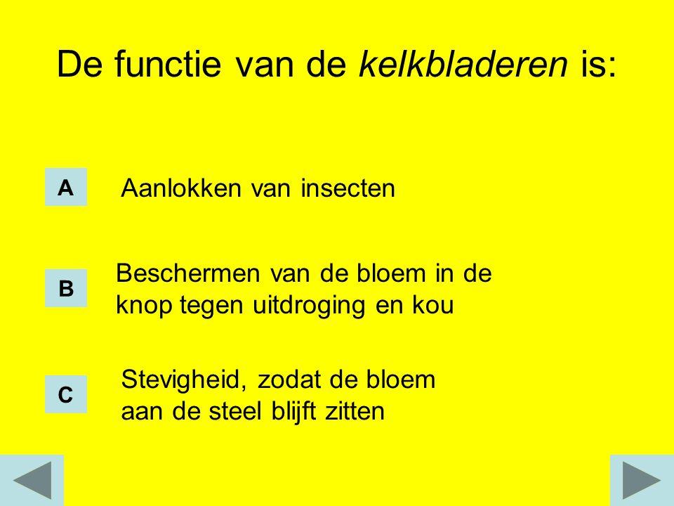De functie van de kelkbladeren is:
