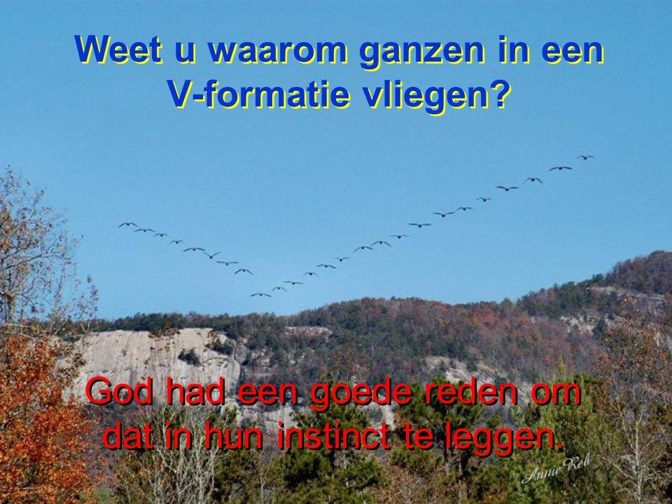 Weet u waarom ganzen in een V-formatie vliegen