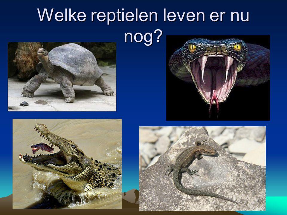 Welke reptielen leven er nu nog