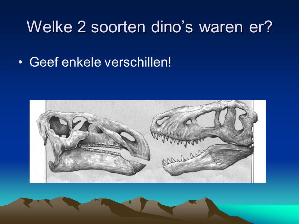 Welke 2 soorten dino's waren er