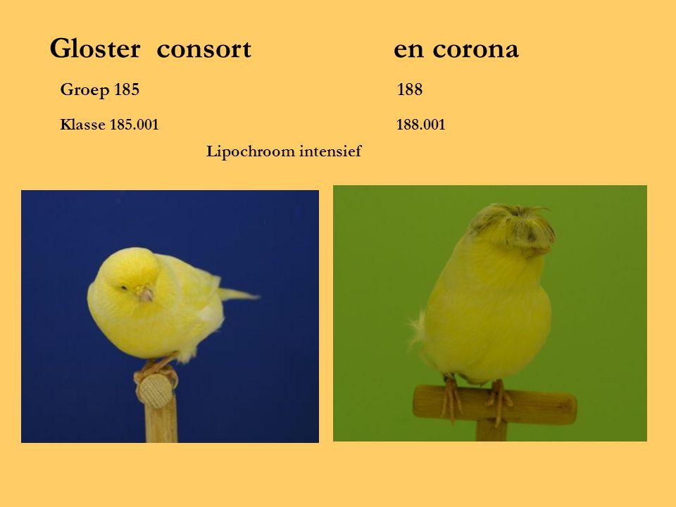 Gloster consort en corona