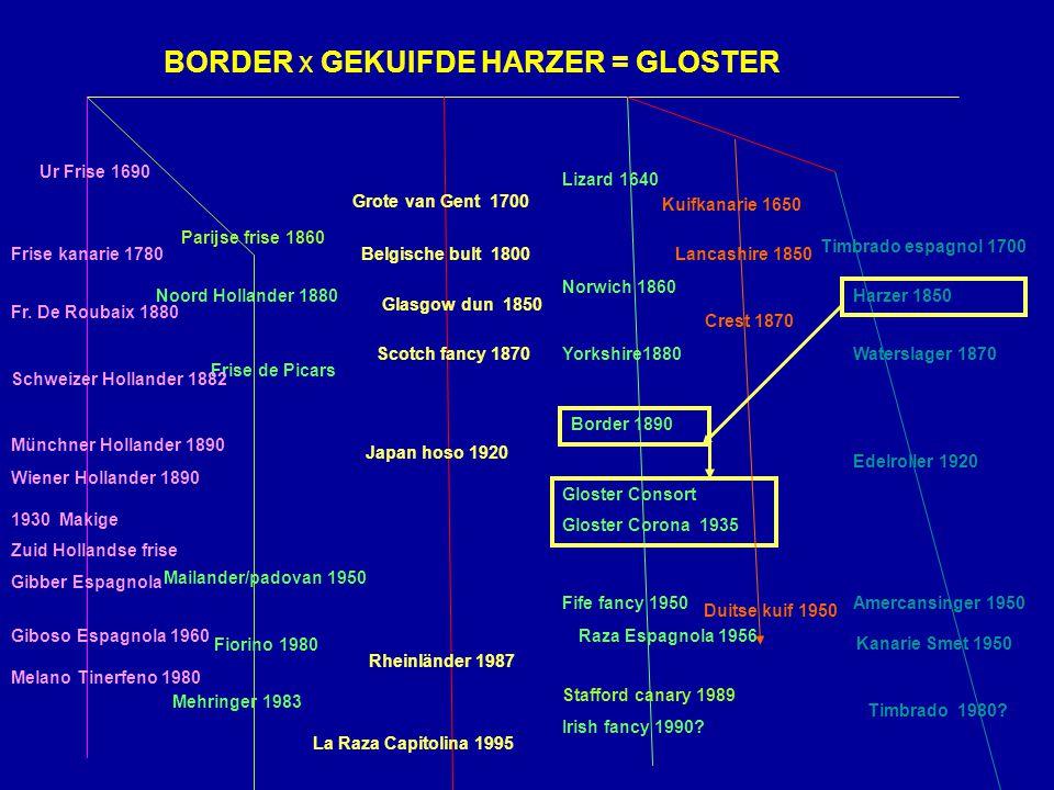 BORDER x GEKUIFDE HARZER = GLOSTER