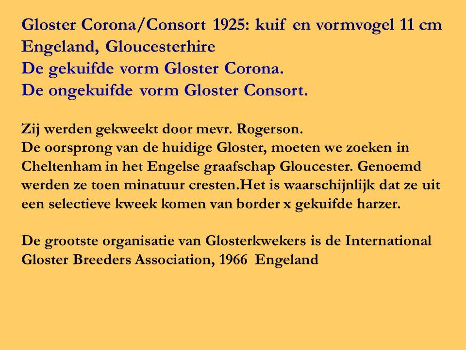 Gloster Corona/Consort 1925: kuif en vormvogel 11 cm