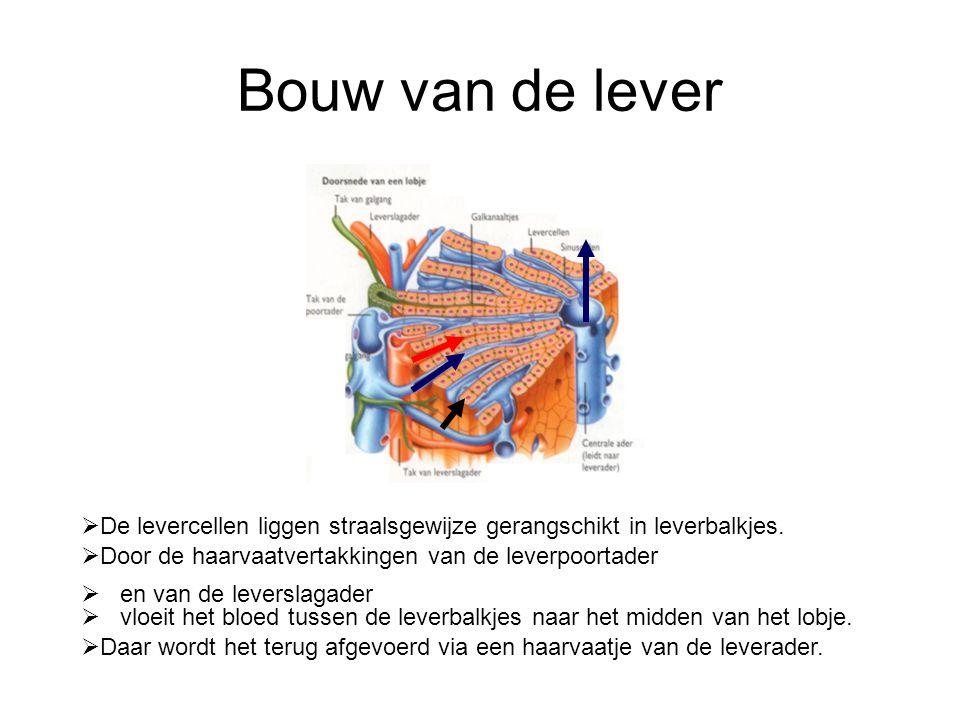 Bouw van de lever De levercellen liggen straalsgewijze gerangschikt in leverbalkjes. Door de haarvaatvertakkingen van de leverpoortader.