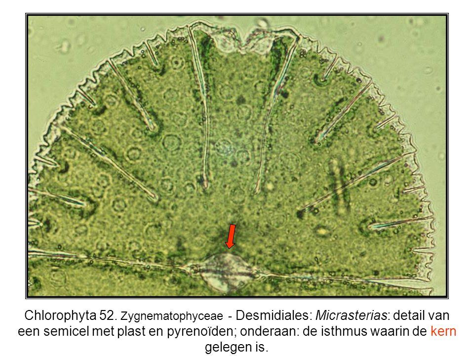 Chlorophyta 52.