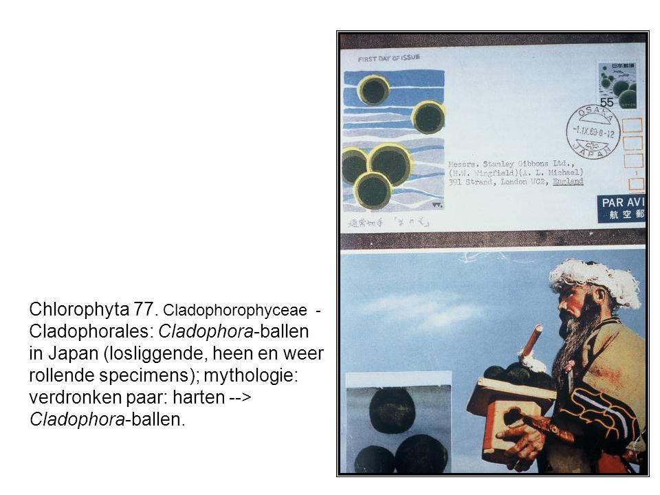 Chlorophyta 77.