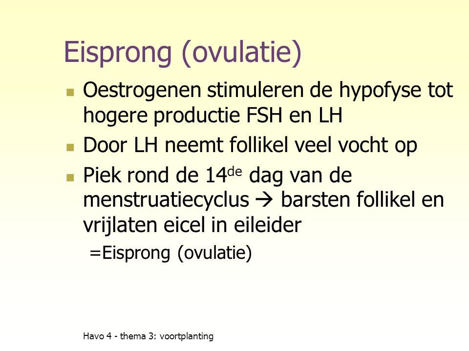 Eisprong (ovulatie) Oestrogenen stimuleren de hypofyse tot hogere productie FSH en LH. Door LH neemt follikel veel vocht op.