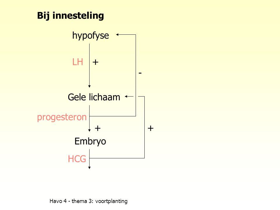 Bij innesteling hypofyse LH + - Gele lichaam progesteron + + Embryo