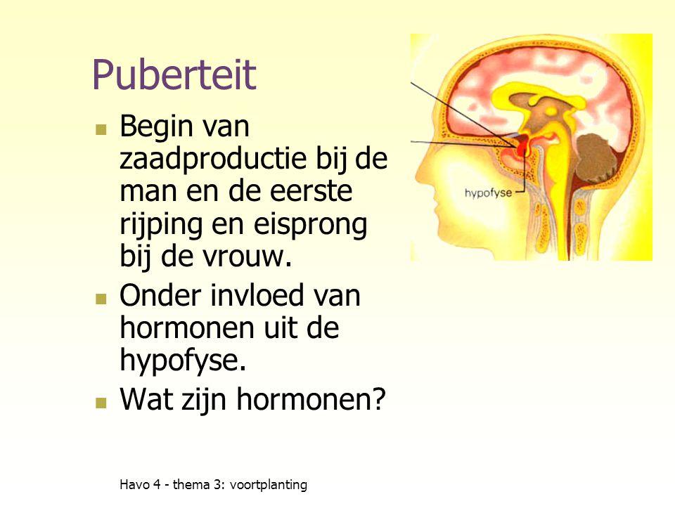 Puberteit Begin van zaadproductie bij de man en de eerste rijping en eisprong bij de vrouw. Onder invloed van hormonen uit de hypofyse.