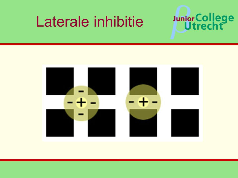 Laterale inhibitie