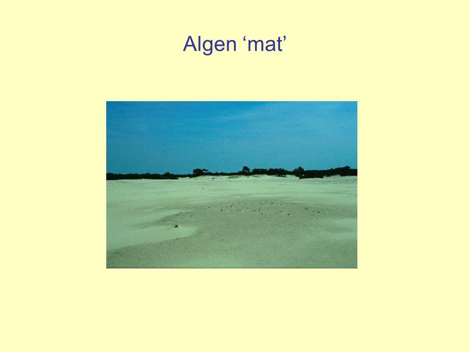 Algen 'mat'