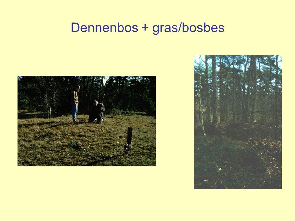 Dennenbos + gras/bosbes