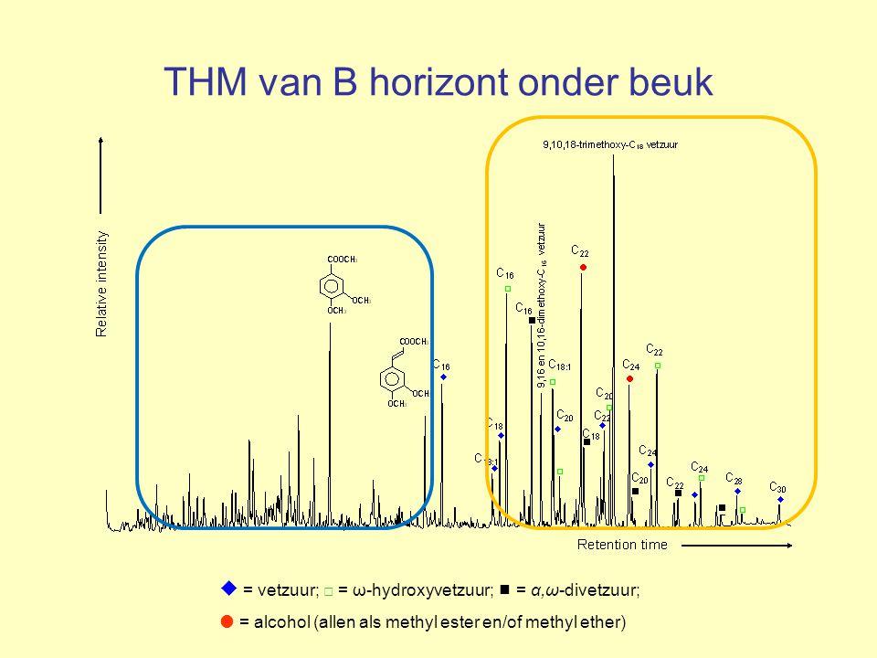 THM van B horizont onder beuk
