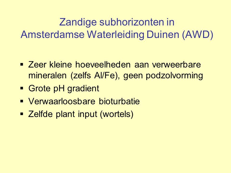 Zandige subhorizonten in Amsterdamse Waterleiding Duinen (AWD)
