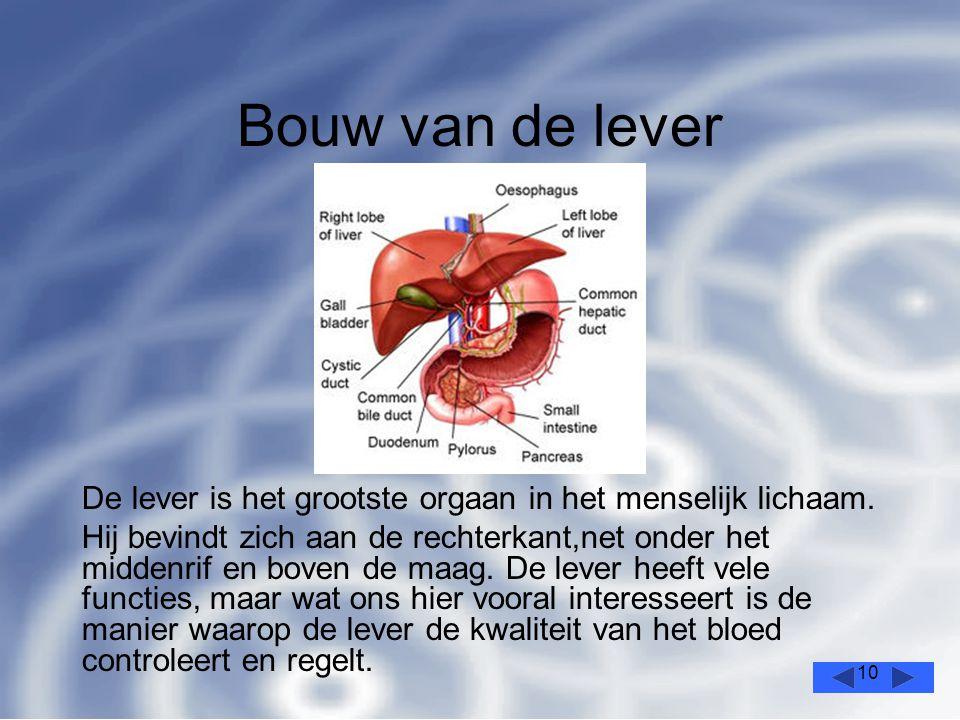 Bouw van de lever De lever is het grootste orgaan in het menselijk lichaam.