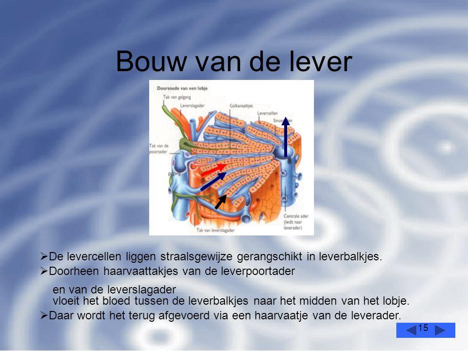 Bouw van de lever De levercellen liggen straalsgewijze gerangschikt in leverbalkjes. Doorheen haarvaattakjes van de leverpoortader.