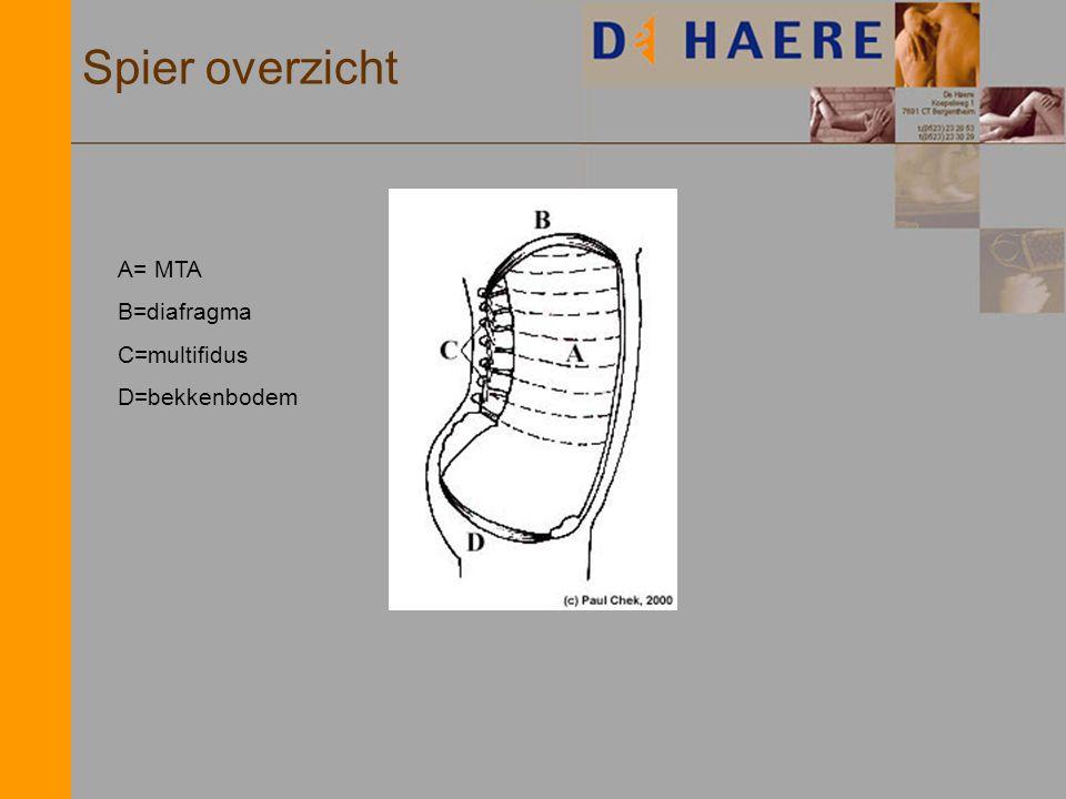 Spier overzicht A= MTA B=diafragma C=multifidus D=bekkenbodem