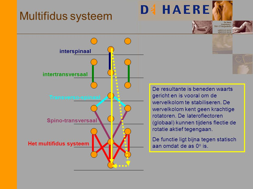 Multifidus systeem interspinaal intertransversaal