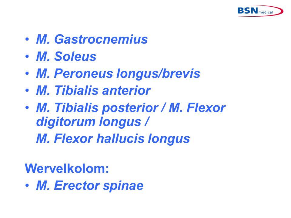 M. Gastrocnemius M. Soleus. M. Peroneus longus/brevis. M. Tibialis anterior. M. Tibialis posterior / M. Flexor digitorum longus /