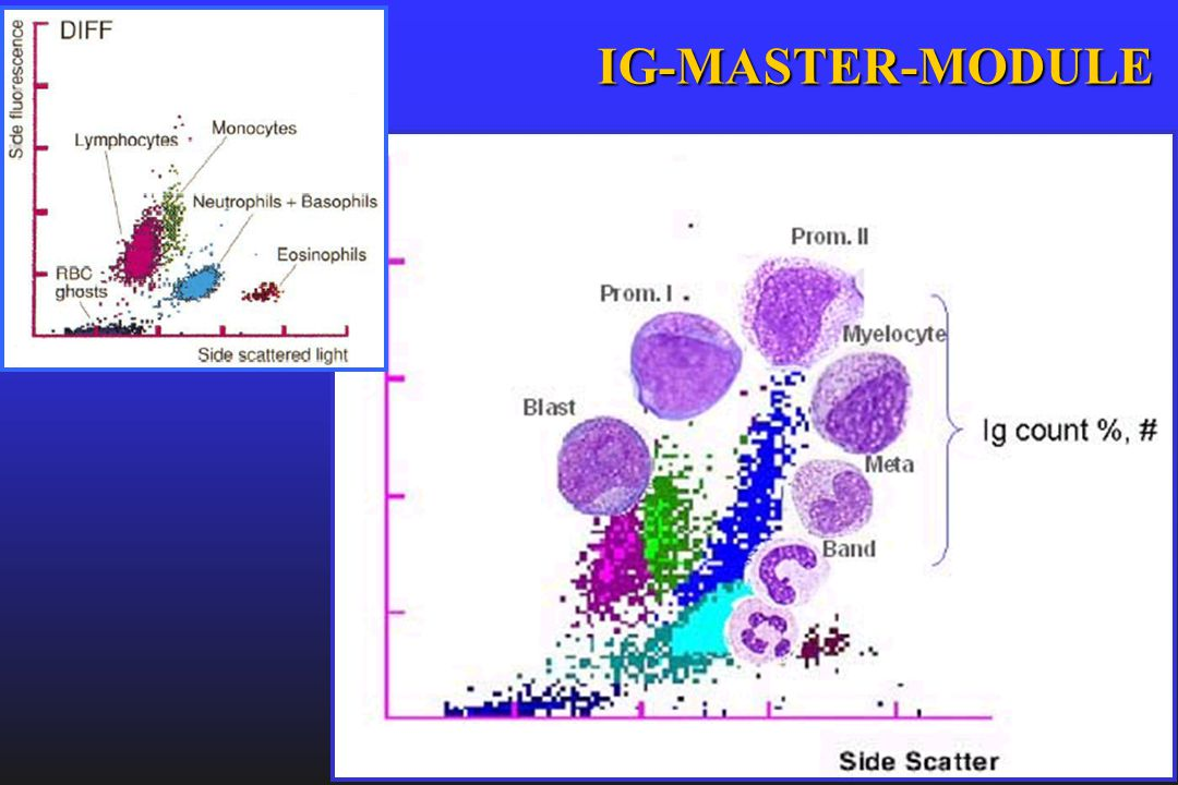 IG-MASTER-MODULE