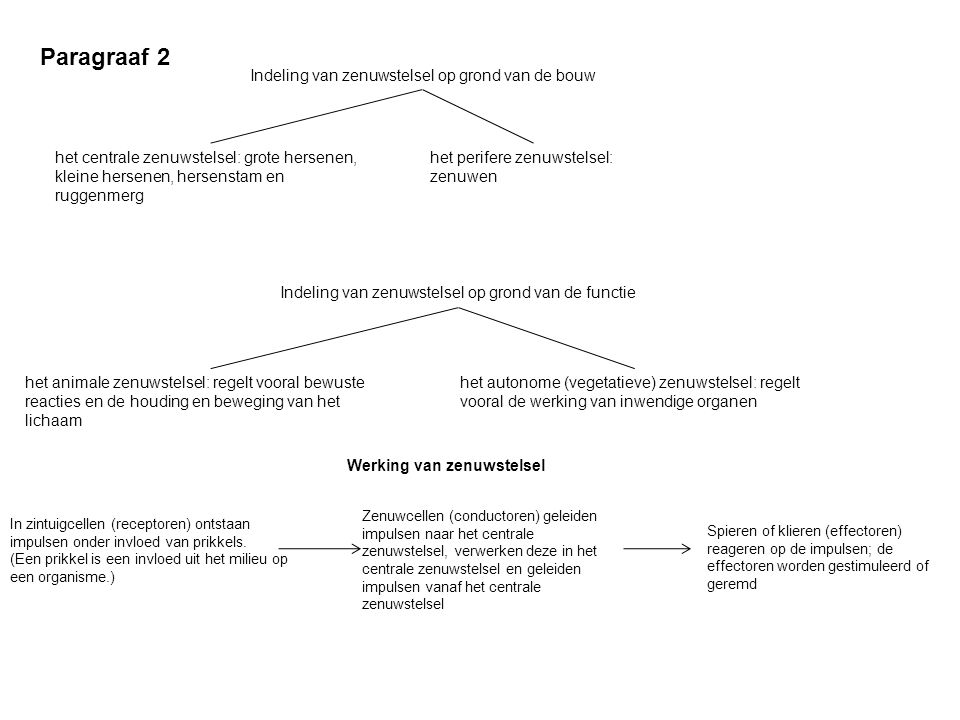 Paragraaf 2 Indeling van zenuwstelsel op grond van de bouw