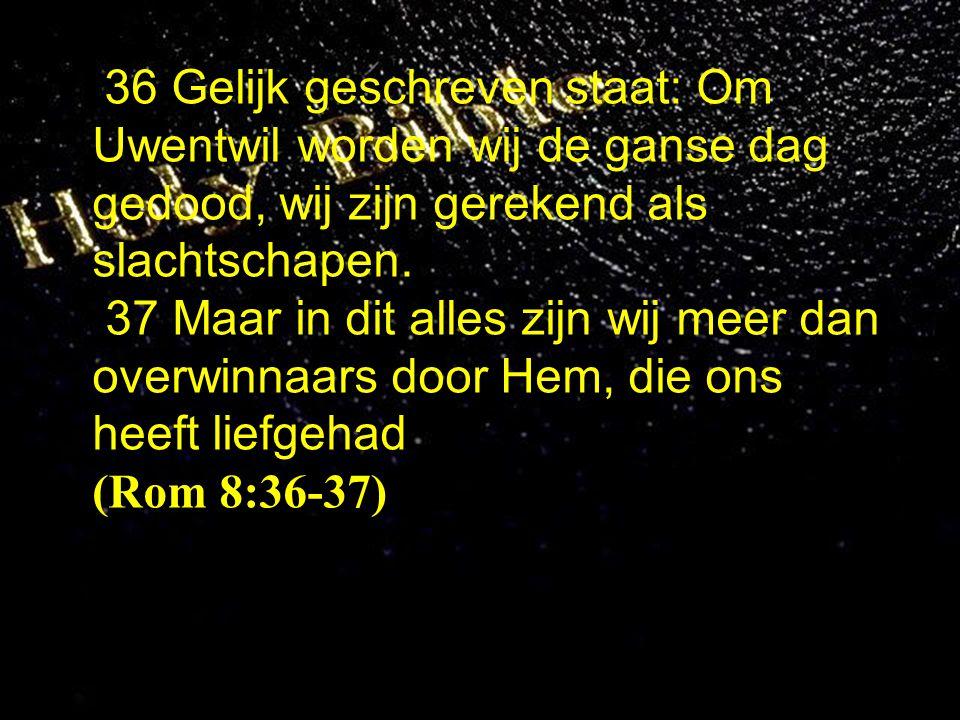 36 Gelijk geschreven staat: Om Uwentwil worden wij de ganse dag gedood, wij zijn gerekend als slachtschapen.