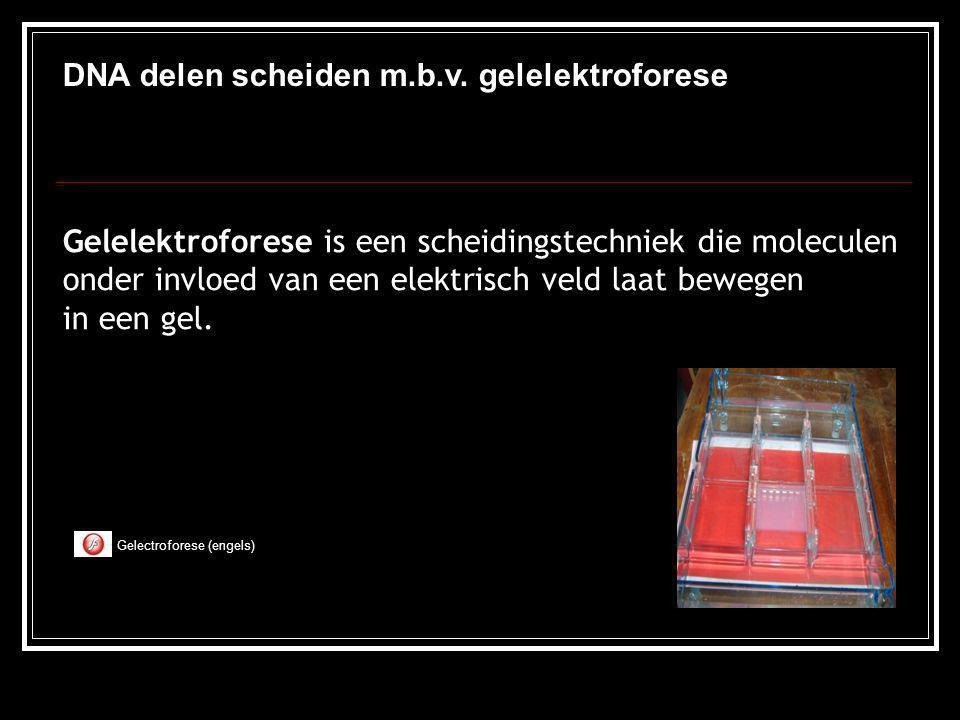 DNA delen scheiden m.b.v. gelelektroforese