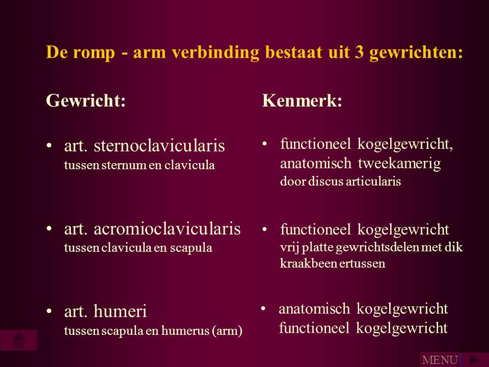 De romp - arm verbinding bestaat uit 3 gewrichten: