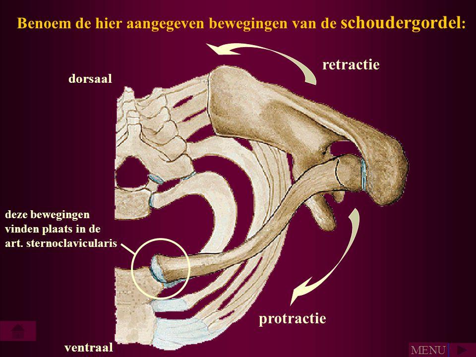 Benoem de hier aangegeven bewegingen van de schoudergordel: