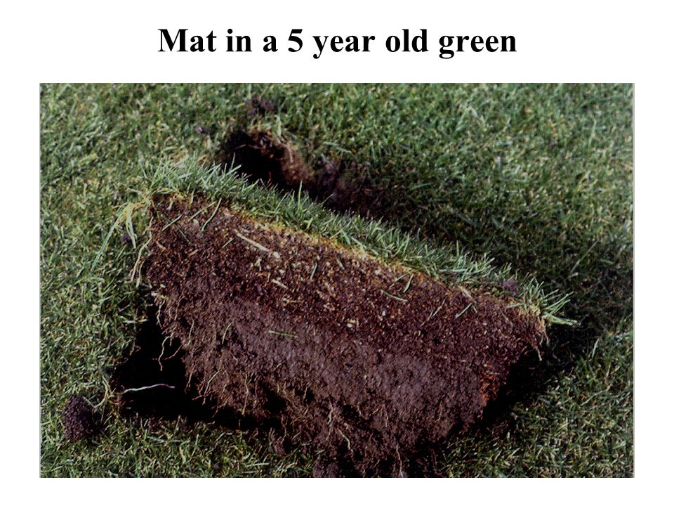 Mat in a 5 year old green Mat is a mixture of thatch and top dressing.