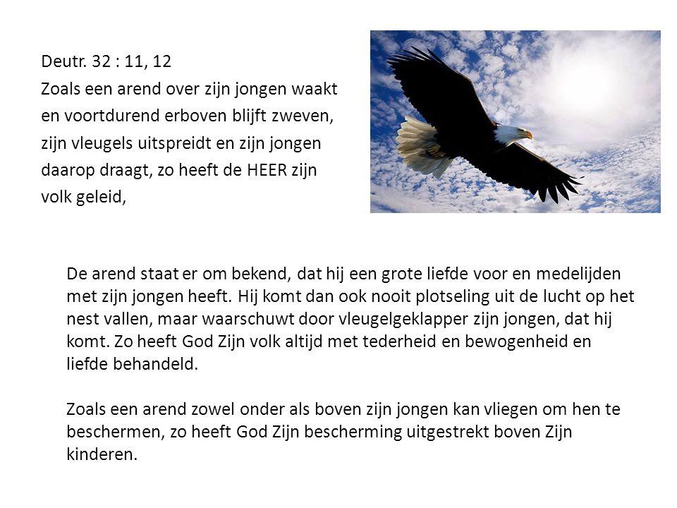 Deutr. 32 : 11, 12 Zoals een arend over zijn jongen waakt. en voortdurend erboven blijft zweven, zijn vleugels uitspreidt en zijn jongen.