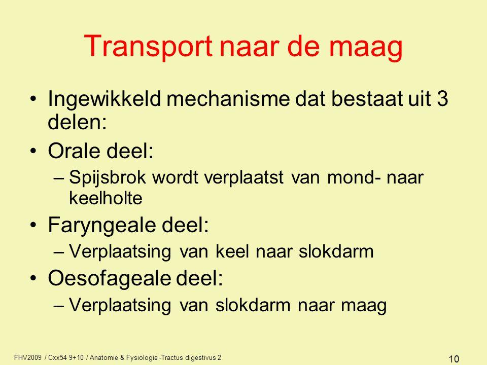 Transport naar de maag Ingewikkeld mechanisme dat bestaat uit 3 delen: