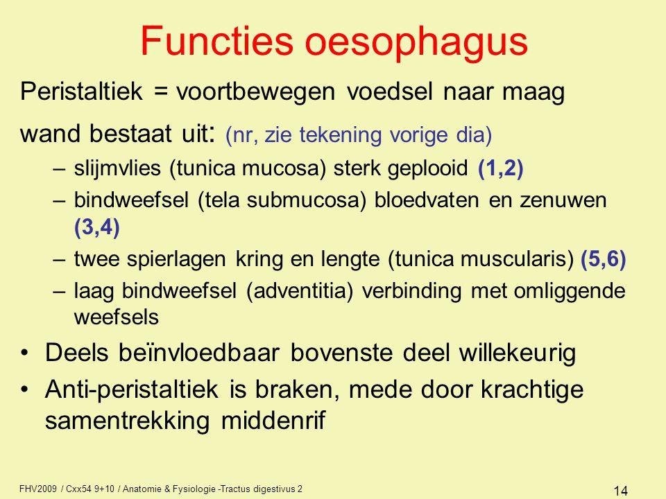 Functies oesophagus Peristaltiek = voortbewegen voedsel naar maag