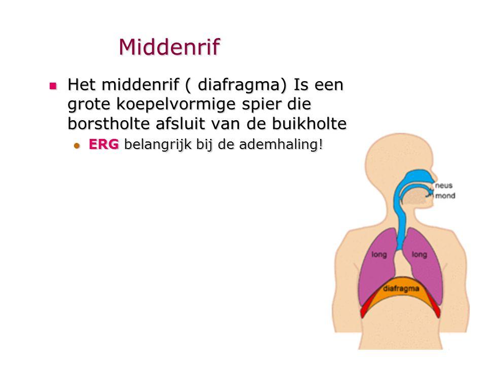 Middenrif Het middenrif ( diafragma) Is een grote koepelvormige spier die borstholte afsluit van de buikholte.