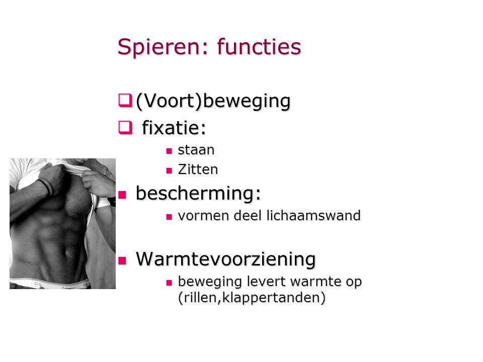 Spieren: functies (Voort)beweging fixatie: bescherming: