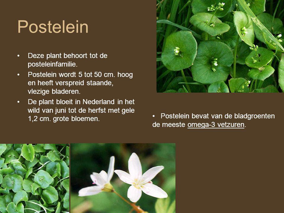 Postelein Deze plant behoort tot de posteleinfamilie.